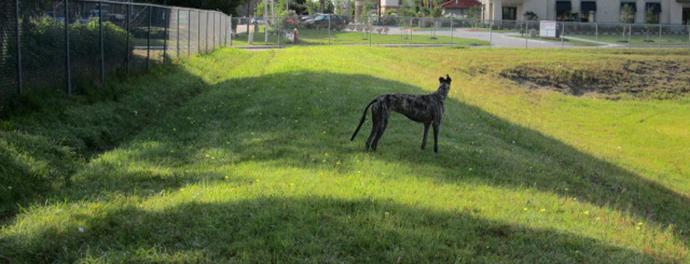 Takota the happy greyhound