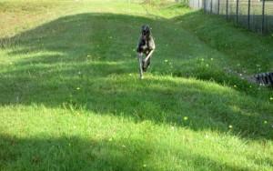 greyhound-02