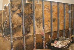 Indoor mold infestation